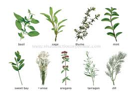 herbs and supplements for pcos