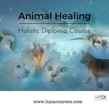 animal healing diploma course